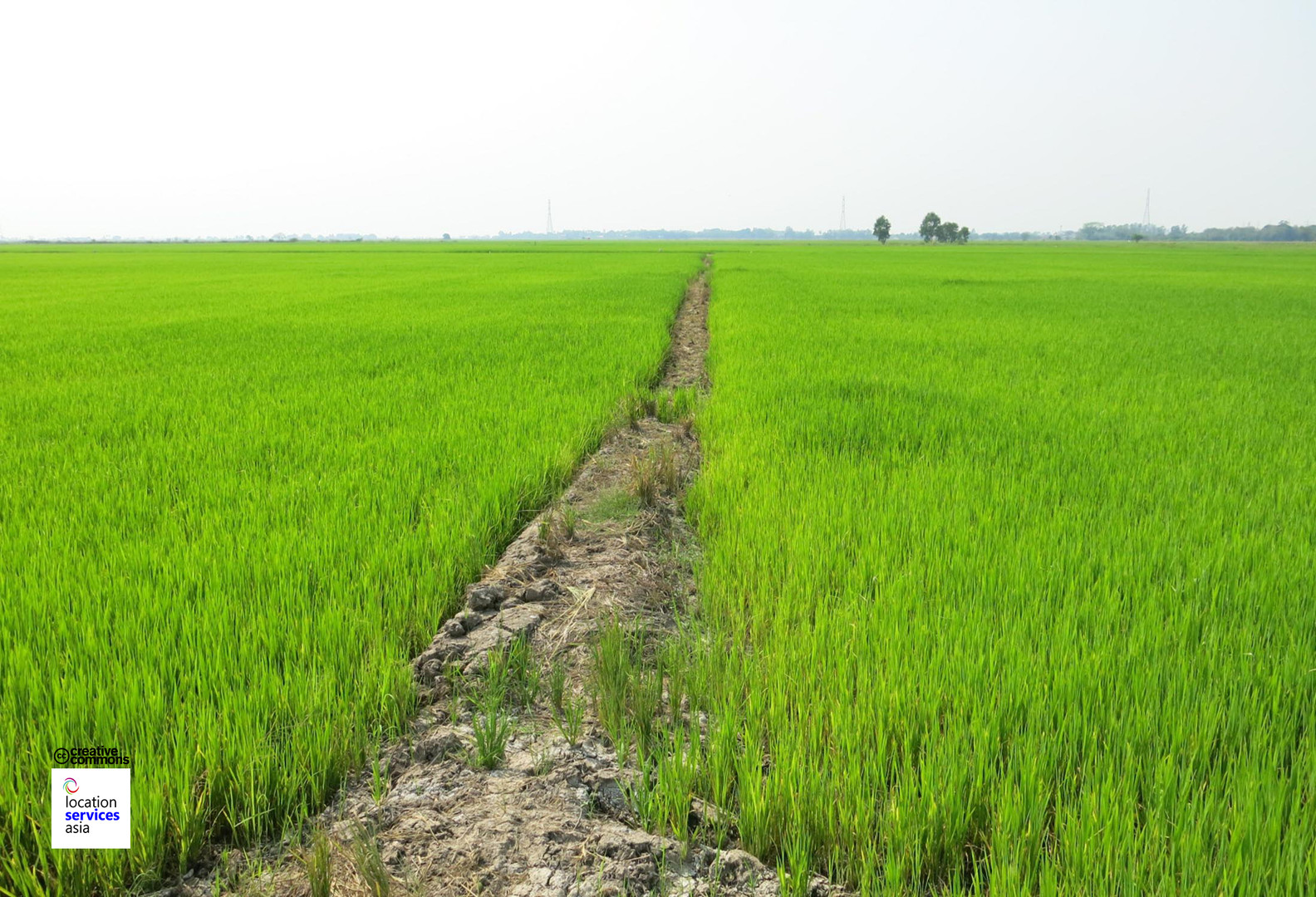 thai film locations farms fields c.jpg