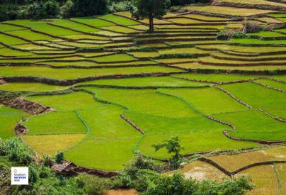 thai film locations farms fields r.jpg