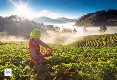 thai film locations farms fields o.jpg