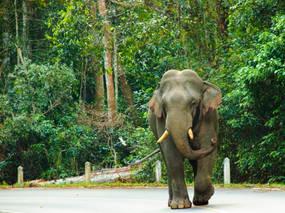 khao-yai-national-park-standard.jpg