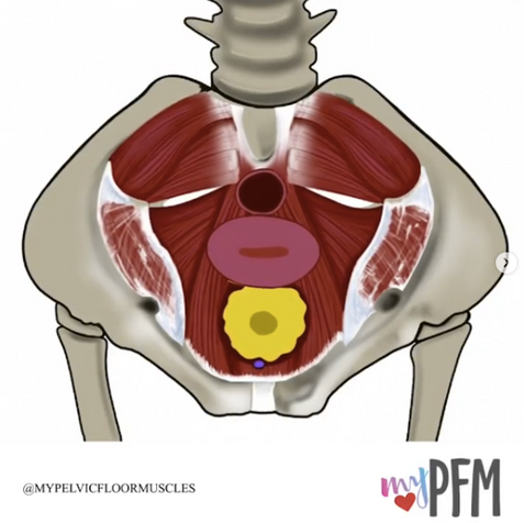 Femal Top View Contraction
