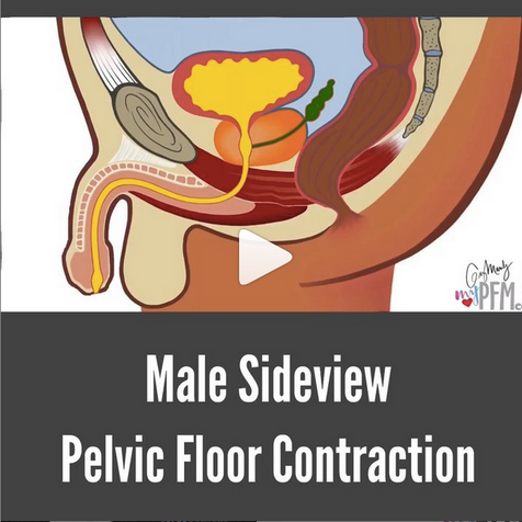 Male Sideview Pelvic Floor Contraction