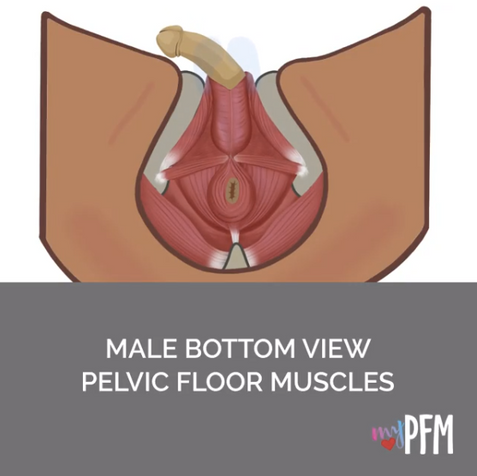 Male Bottom View Contraction