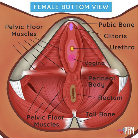 Female Bottom view infographic.png