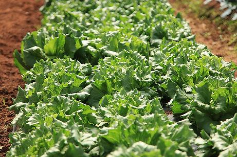 下平ファームの野菜