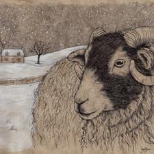 winter ewe adjusted 10x14 2.jpg