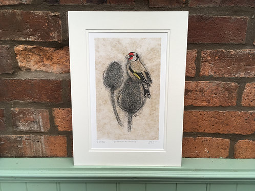 Goldfinch and Teasels Limited Edition Print