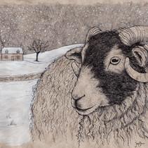 Winter Ewe