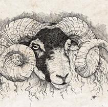 Scottish Blackface Ram