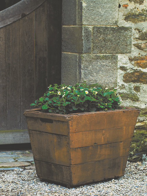 Vendange Planter Large