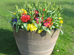 7813-flowers-in-a-flower-pot-on-the-grass-pv