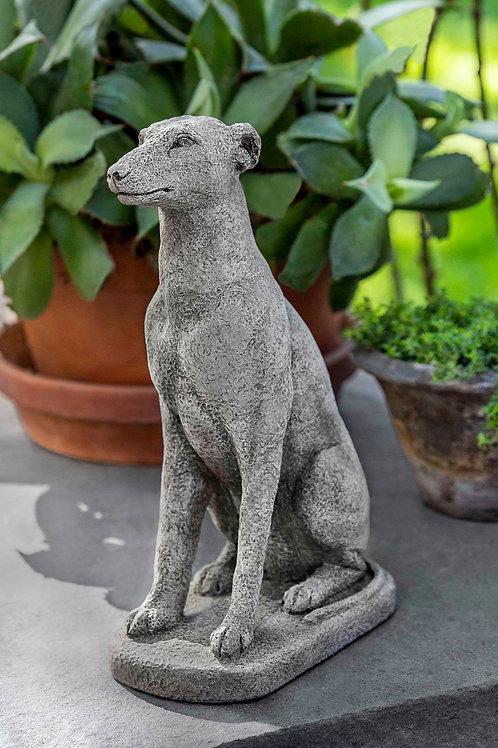 """12"""" Greyhound"""