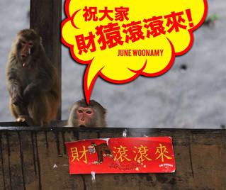 Happy New Year! 財'猿'滾滾來!