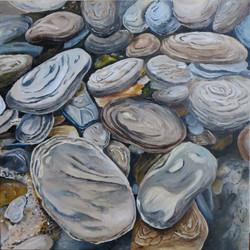 Steine am Kawarau River