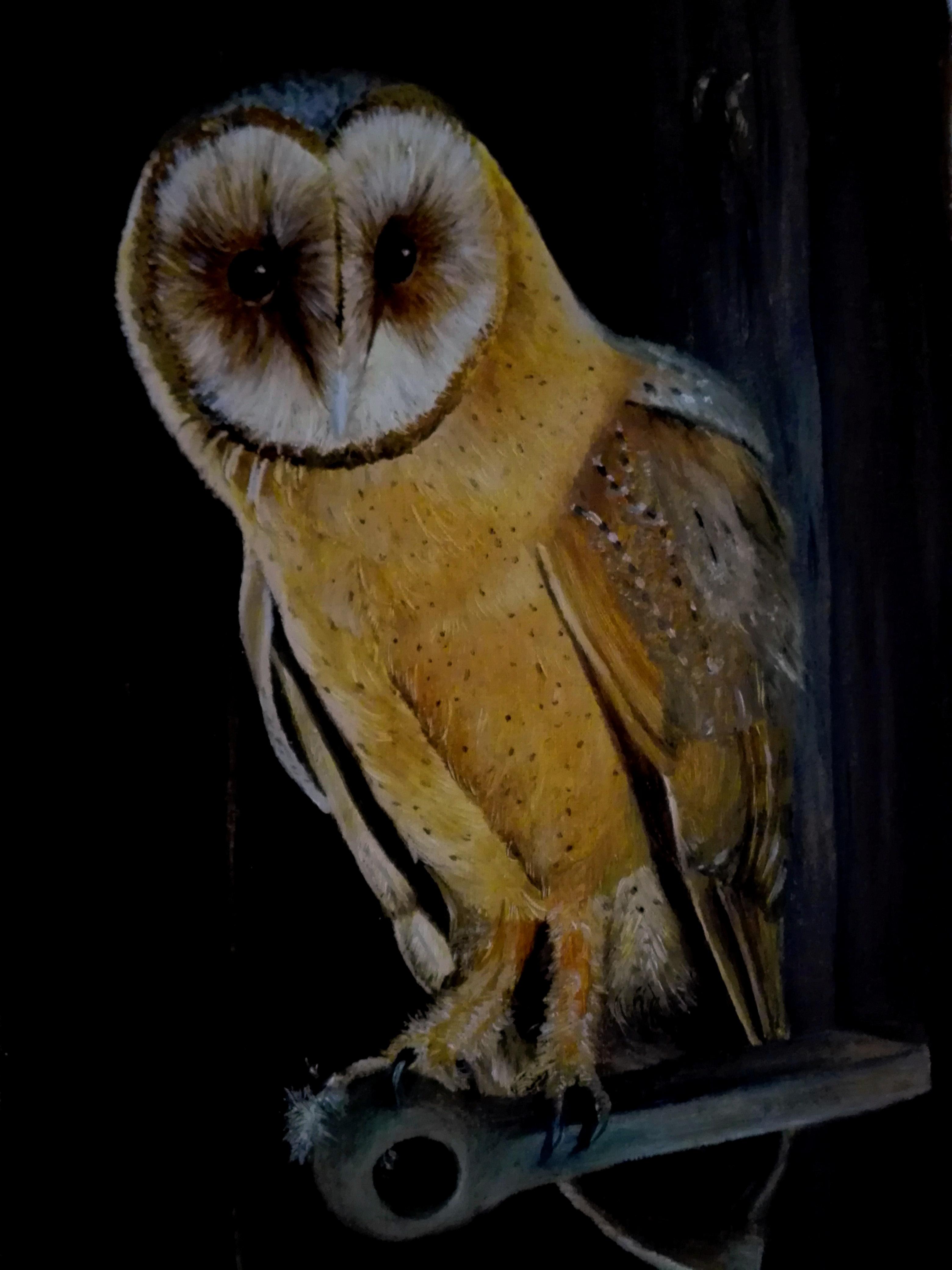 Owl in Oil (30x20) Öl auf LW