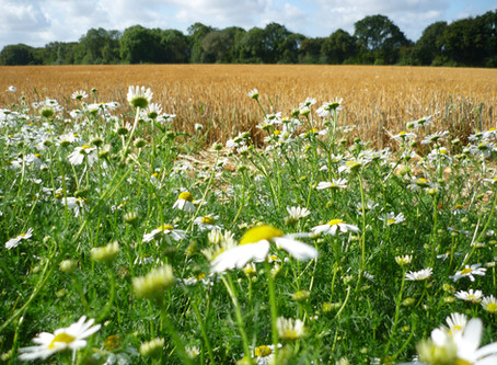 Daisys Oxfordshire