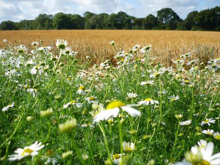 Daisys Oxfordshire