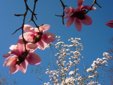 Blossom Springtime