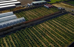 Farms Drone Shot