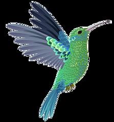 Colibri transparente.png