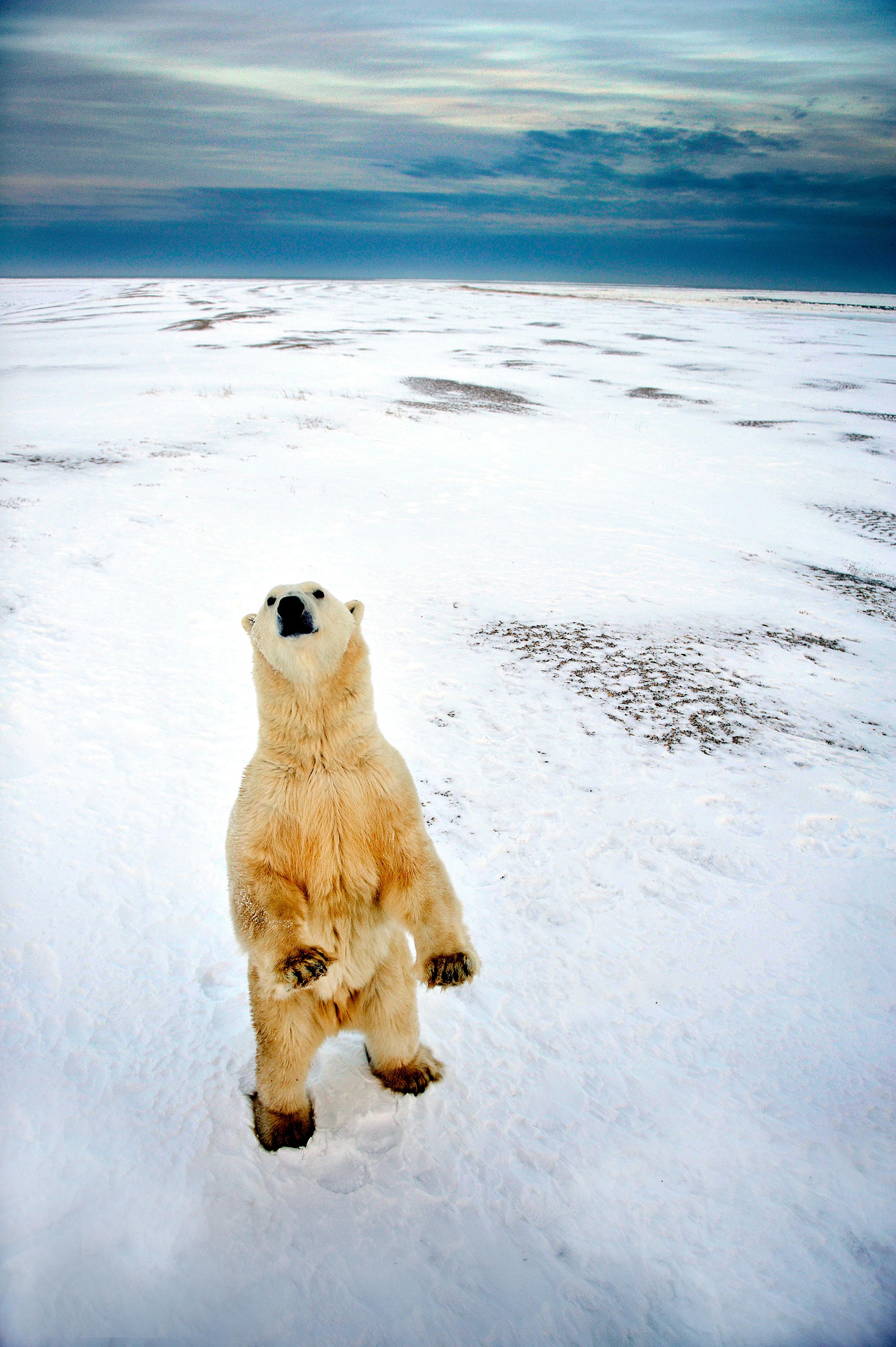 20091122_PolarBears_0689-1