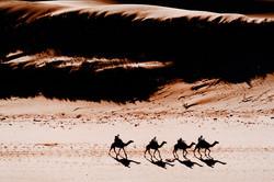 camels eco moroc