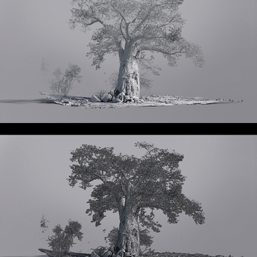 'Baobab' - Process Work