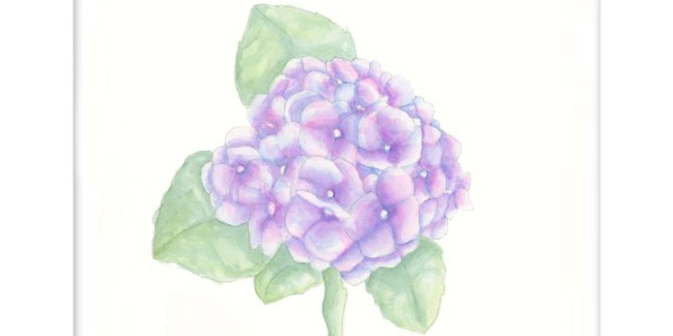 Hydrangea Bloom-Beginner watercolor class