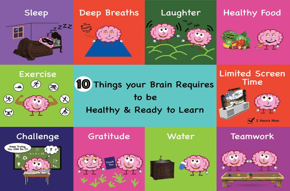 Brain Poster for School