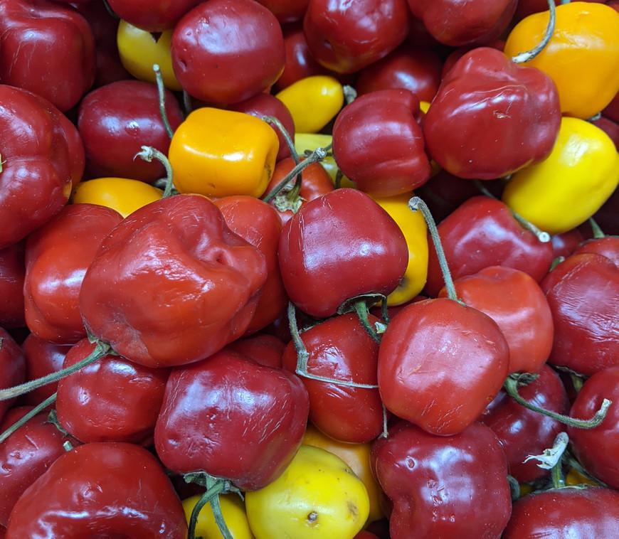 Manzano Chiles