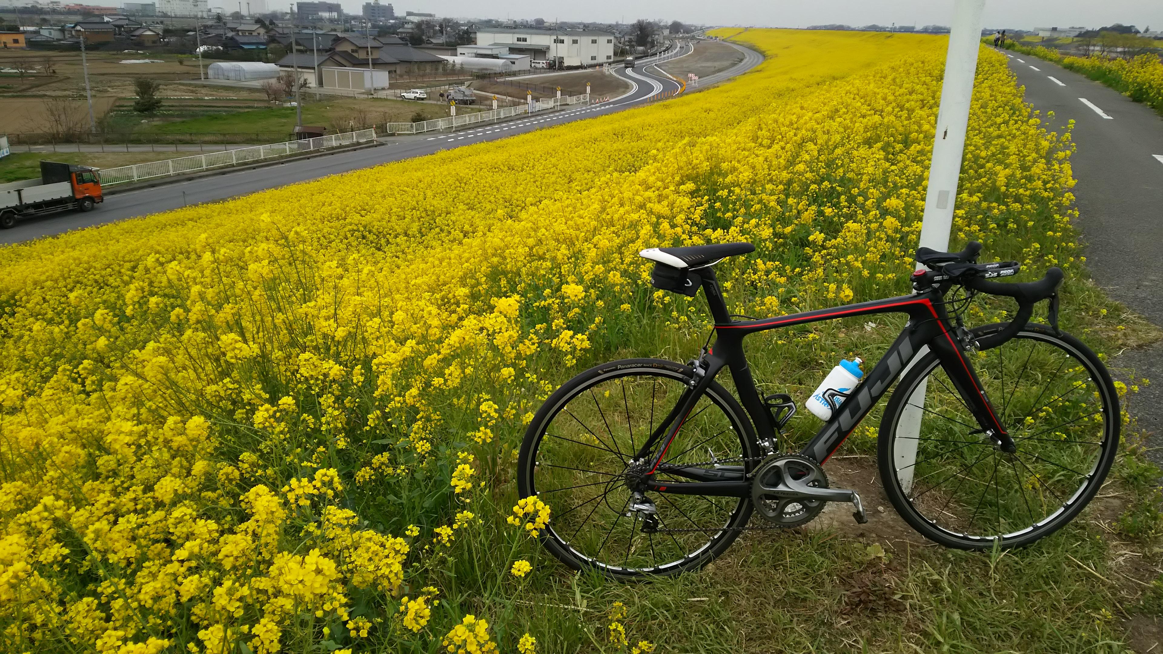 江戸川CR 菜の花ライド