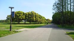 ランニング 水元公園
