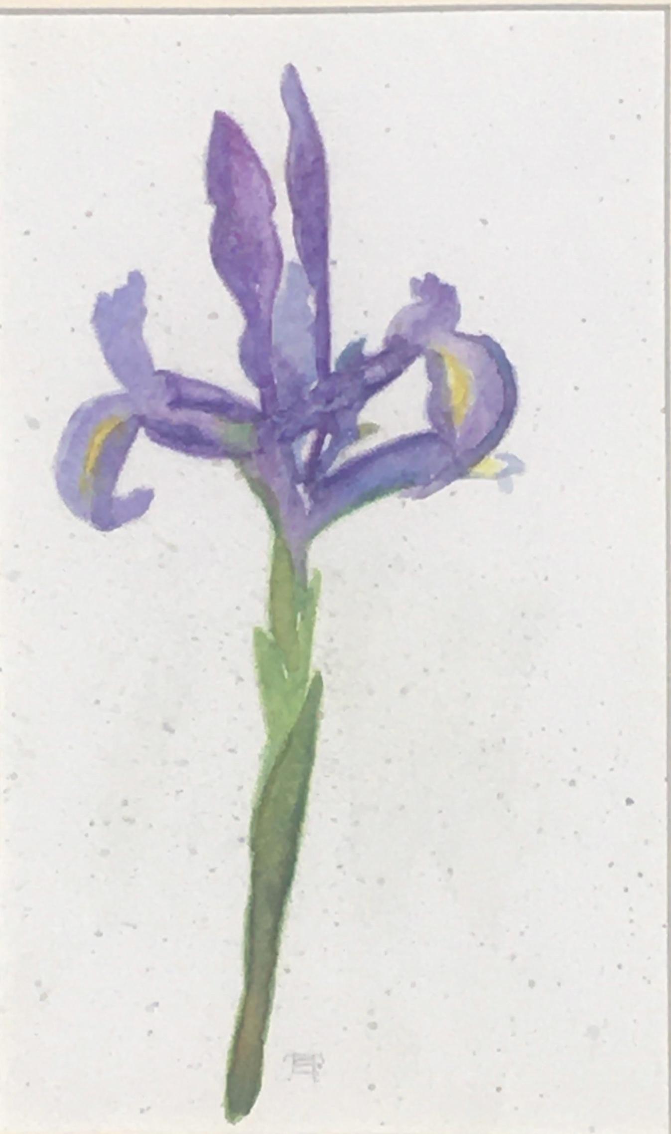 Solitary Iris