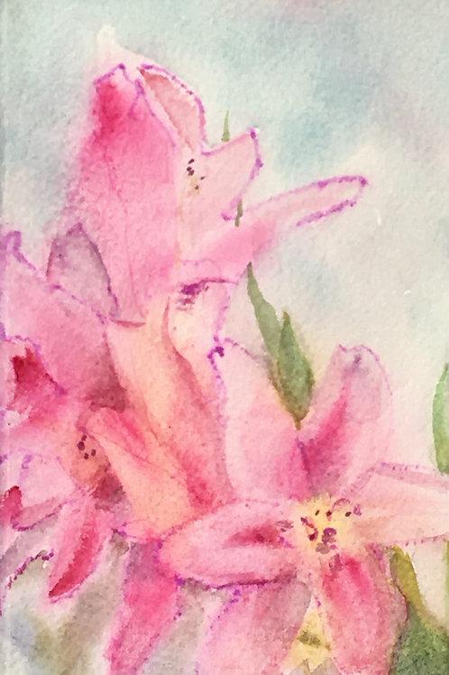 Little Pink Lillies