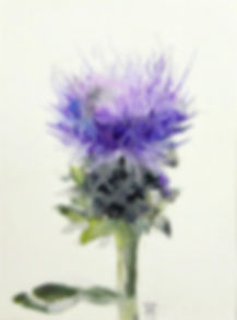 Botanical Watercolor, Thistle, Allison S