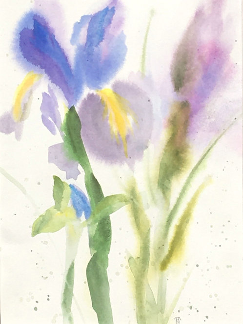 Foggy Iris