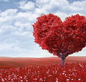 PHOTO HEART TREE.jpg