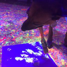 Splatter Paint Lafayette