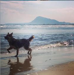 Local Beach and Tarsan Resident