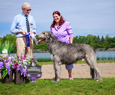 RESERVE-WINNERS-DOG-REG.jpg