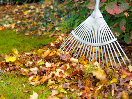 Rake First, Mulch Second