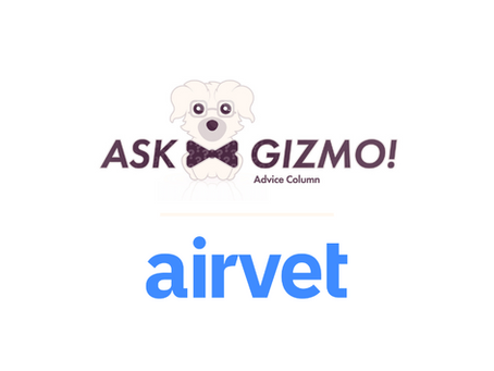 You asked about veterinary telehealth! Gizmo answered.