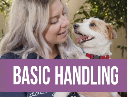 """Tips & Tricks with Sylvia Wes: Basic Handling & """"Puppy Massage"""""""