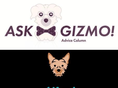 Need a luxury dog gift idea? Gizmo's got you.