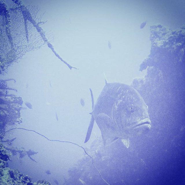 沖縄 ボートダイビング ファンダイビング ダイブコーヴィー PADI 5スター インストラクター IDC IE
