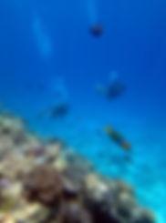 水納島 チンアナゴ