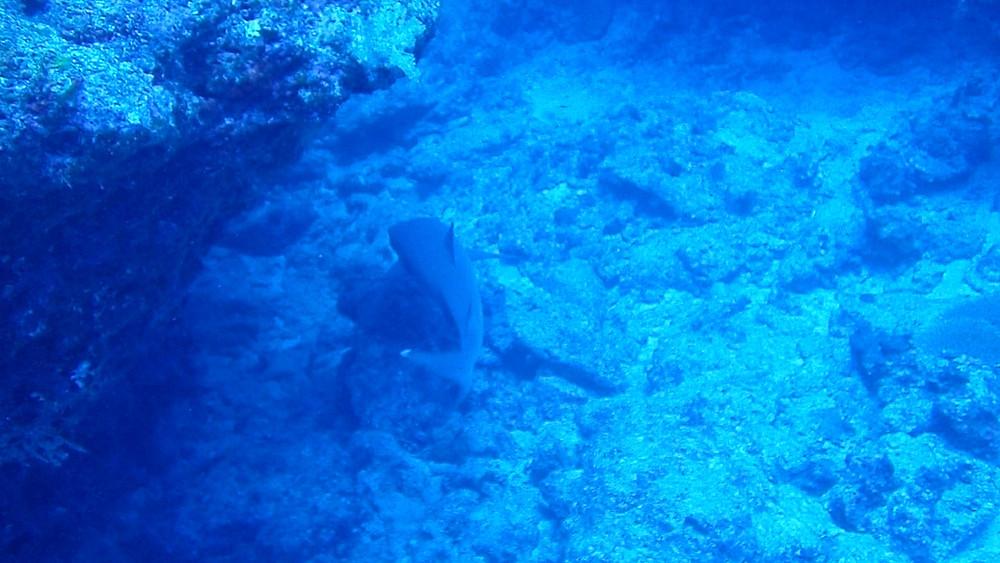 沖縄 ファンダイビング ダイブコーヴィー