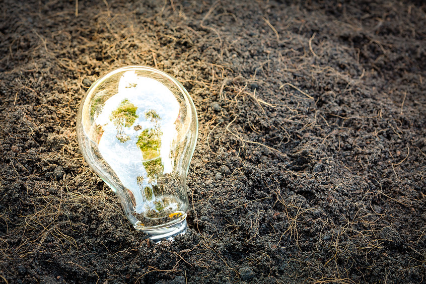 bulb-with-plant-growing-inside.jpg