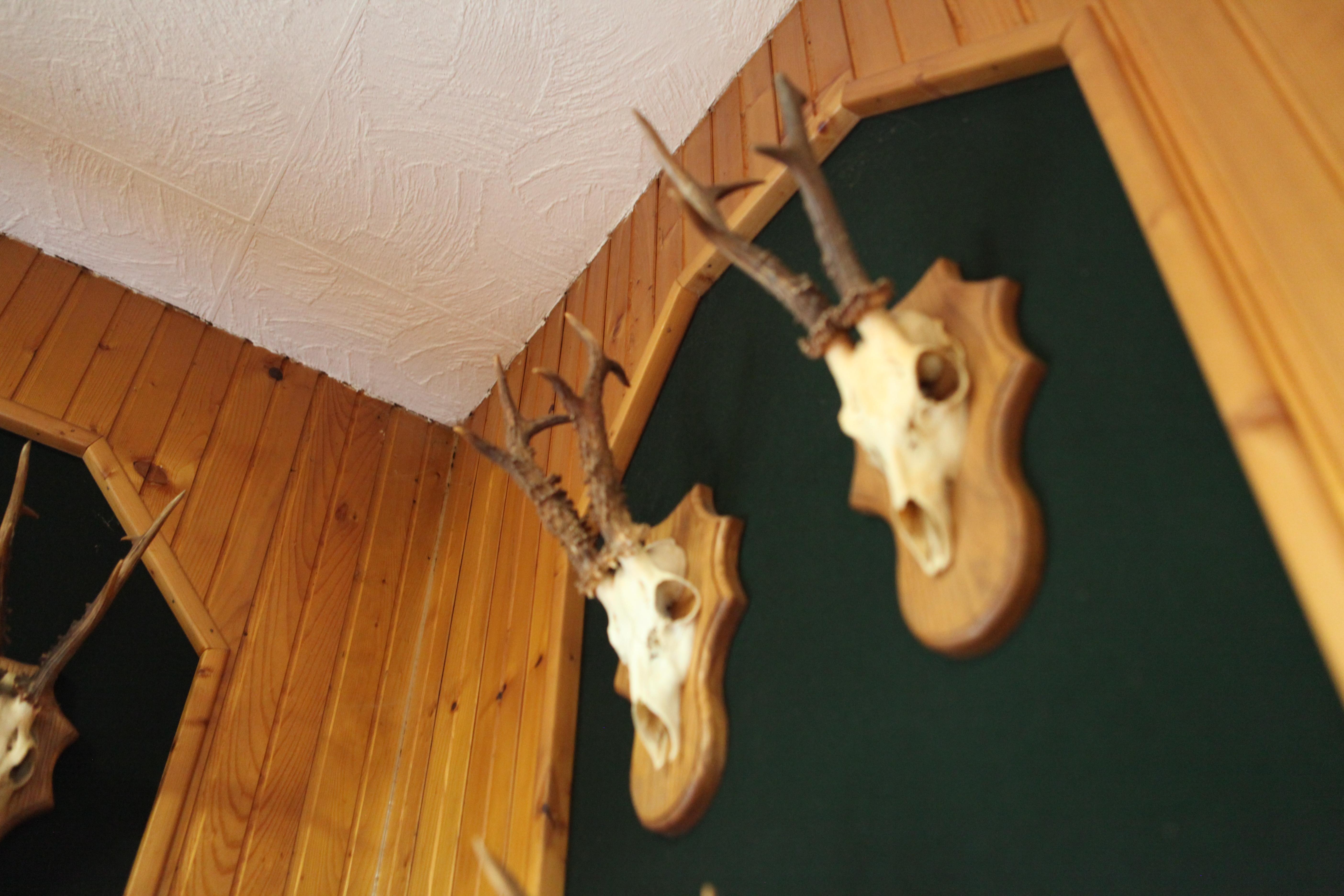 Jagt hyttens væg