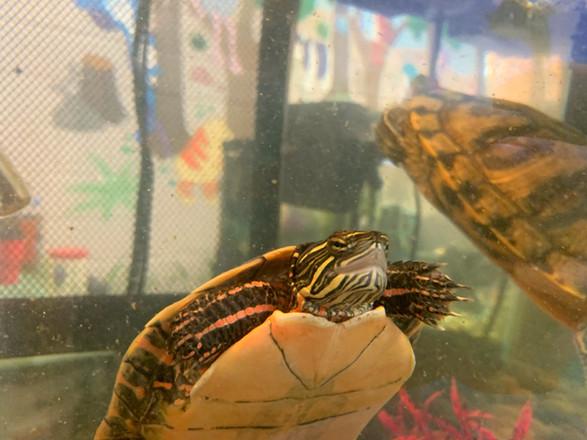 turtle-1.jpeg